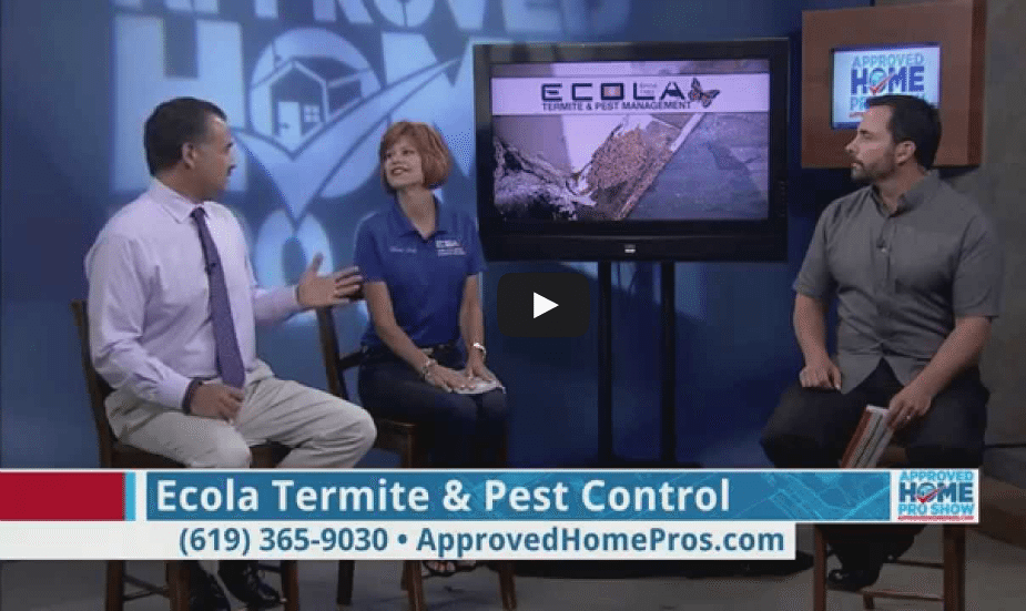 Choosing The Right Termite Treatment